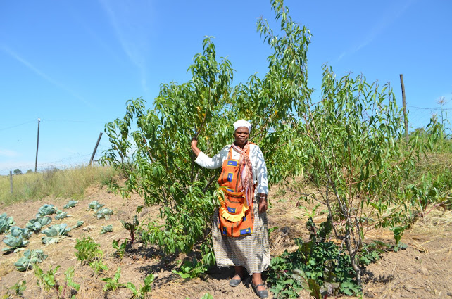 Nomsa standing in front of one of the fruit trees, at Beja, near Mt. Frere
